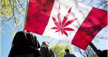 Canadian Cannabis Laws Could Change in 2017
